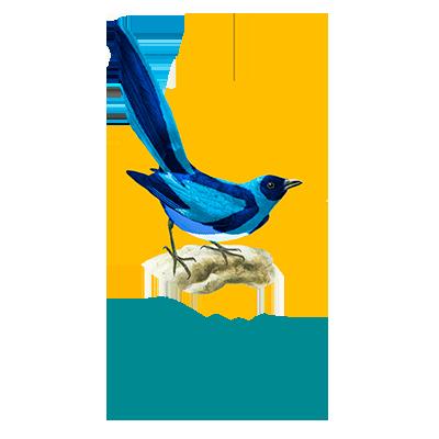 Icaro Pica